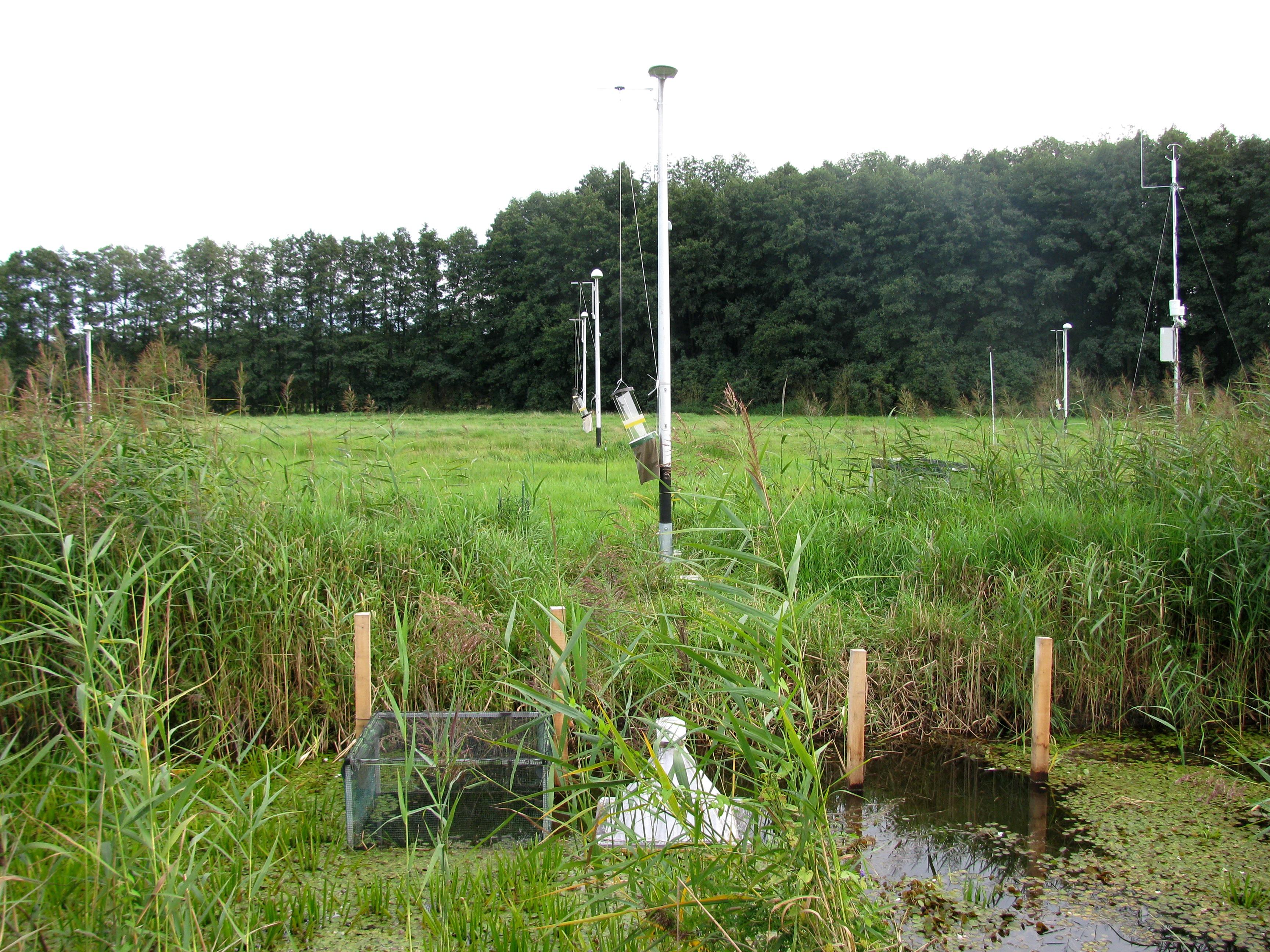 2.Das Versuchsfeld im Westhavelland in einer der dunkelsten Gegenden Deutschlands: Dort installierten die Wissenschaftler  Straßenlaternen an einem Entwässerungsgraben, um die Auswirkungen künstlichen Lichts auf Fische, aber auch auf Insekten, Vögel und Fledermäuse zu erforschen. Foto: IGB