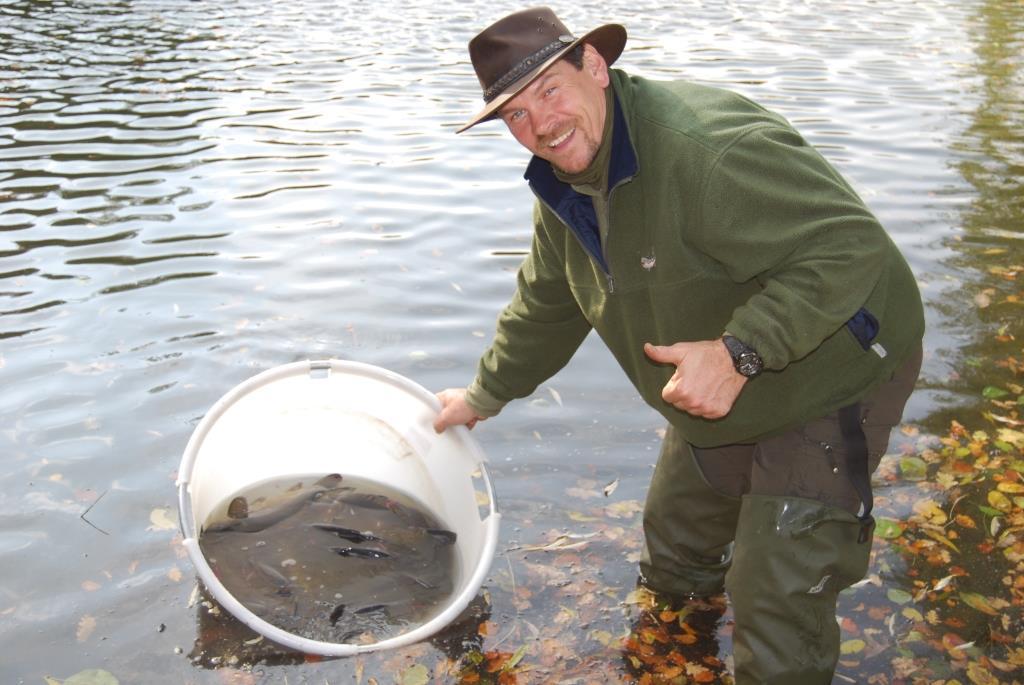 Fischbesatz ist die zentrale Hegemethode in deutschen Binnengewässern. | Foto: Besatzfisch/IGB