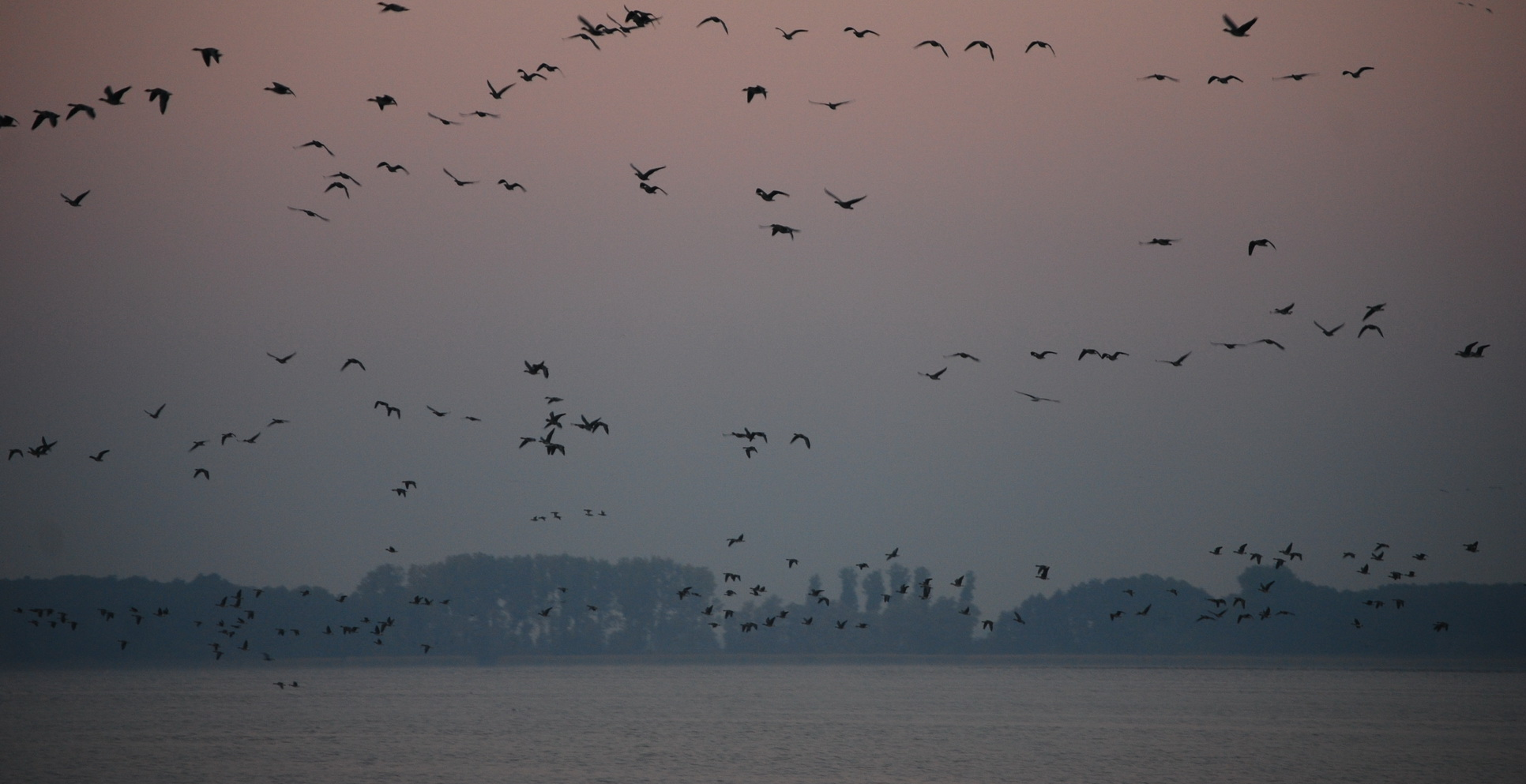 Waterbirds at Lake Arendsee