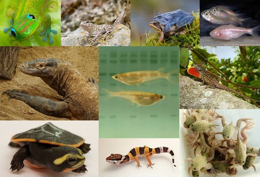 different vertebrates