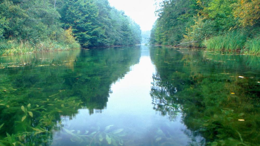HOW TO: Arminace bastelt einen Fluss Polzowkanal%20Pflanzen_Michael%20Feierabend3